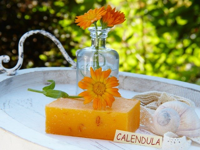 Calendula officinalis / Common Marigold 6